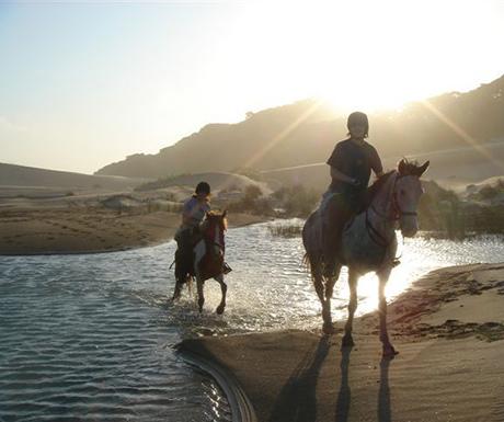 Wild coast horses safari