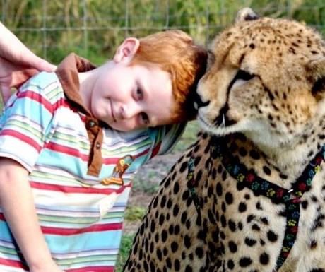 Emdoneni cheetah