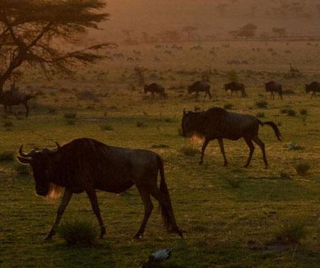 Serengeti Safari Camp, Tanzania