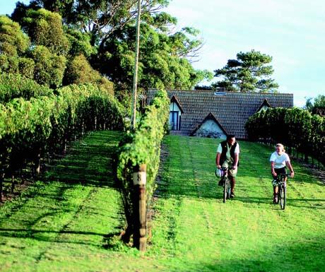 Cycling tours, Marlborough