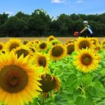 Top 5 cycling destinations for beginners