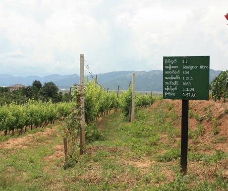 Red Mountain wine estate Inle Lake