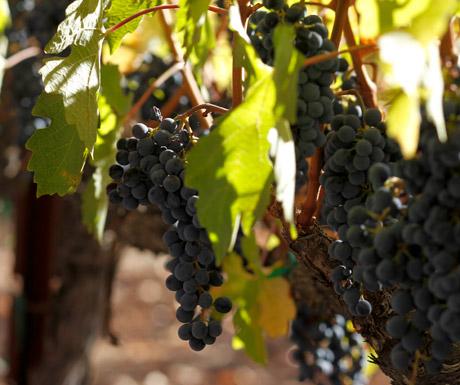 Wine in Napa Valley