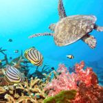 The Maldives photography holiday with a difference