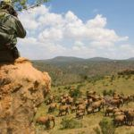 10 great reasons to take a luxury Kenya safari in 2015