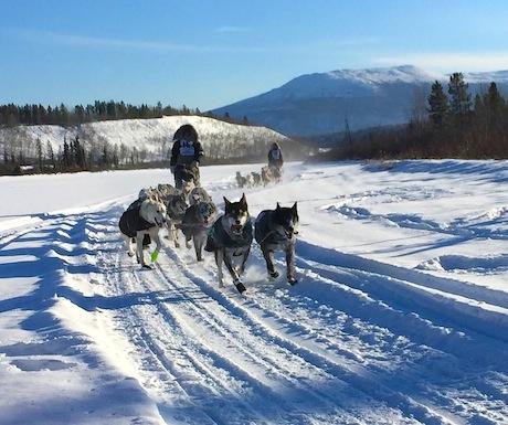 Yukon Quest - still fresh on day 1