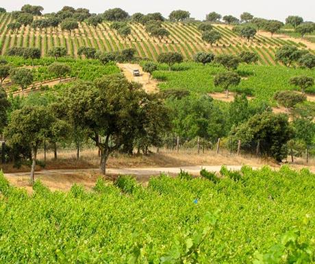 Luxury wine vineyard