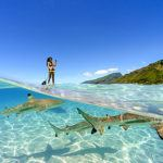 Photograph of the week: Paddleboarding with sharks in Moorea