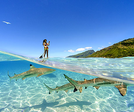 Paddleboarding with sharks