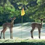 Top golfing breaks in Africa