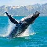 Top 10 places in the world for whale watching