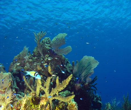 Atlantis submarine rides