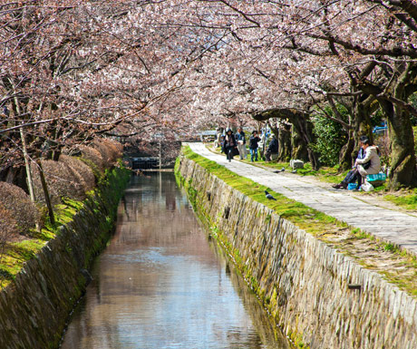 Philisophers stone path, Hanami season, Kyoto, Japan