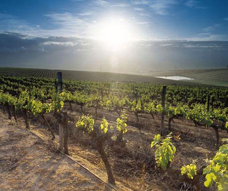 Cederberg wine