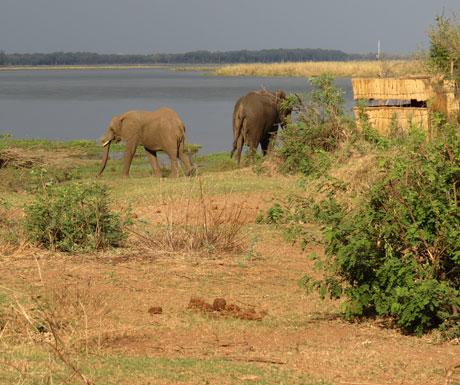 Chiawa Camp Zambezi hide
