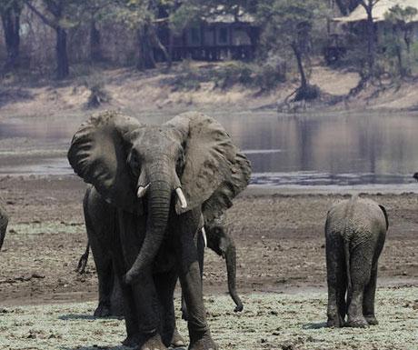 Chindeni Camp elephants