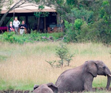 Encounter Mara elephant hide