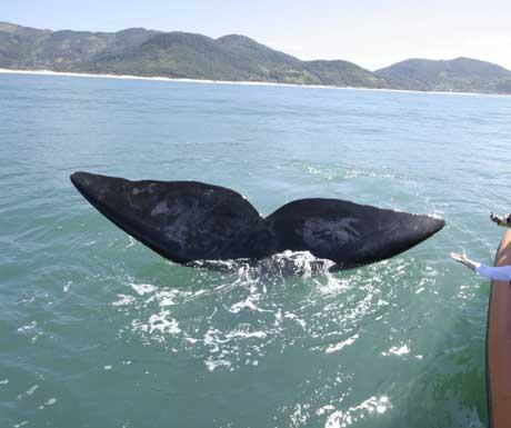 Quinta do Bucanero whales