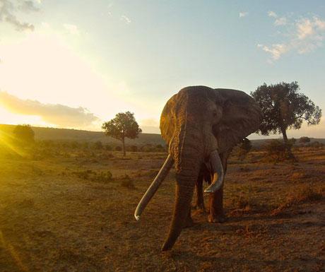 Richards Camp elephants