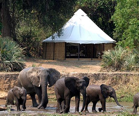 Sausage Tree elephants