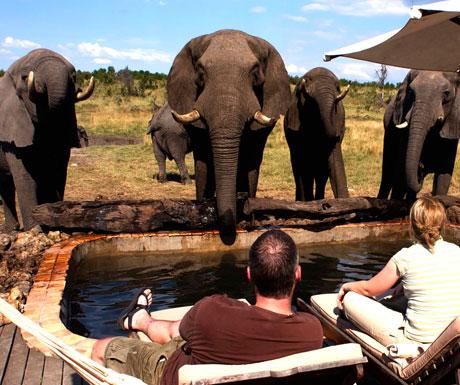 Somalisa elephants