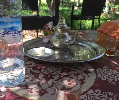 Tea in the Olive Grove