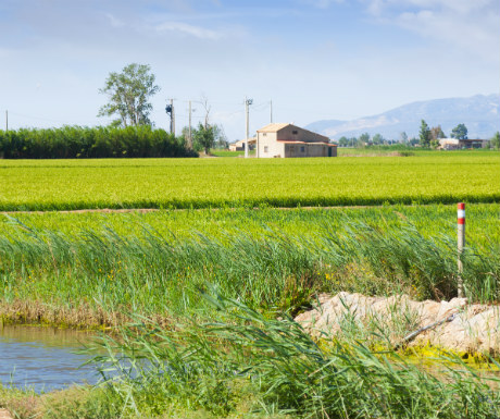Delta de l-Ebro Paddy Fields