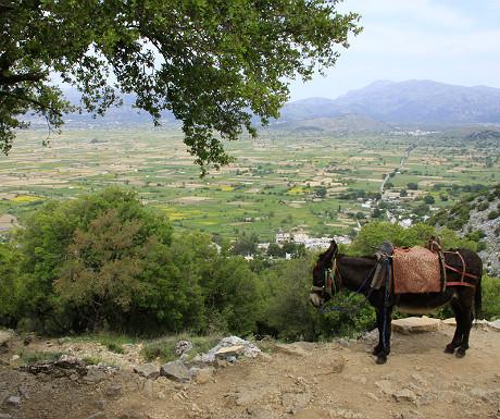 Donkey at Lasithi Plateau