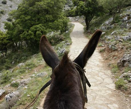 Donkey ride to Zeus cave