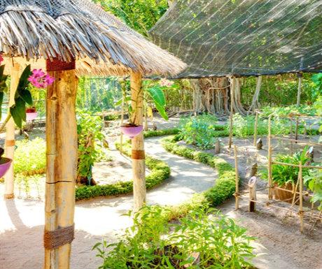 Lux Maldives Herb Garden