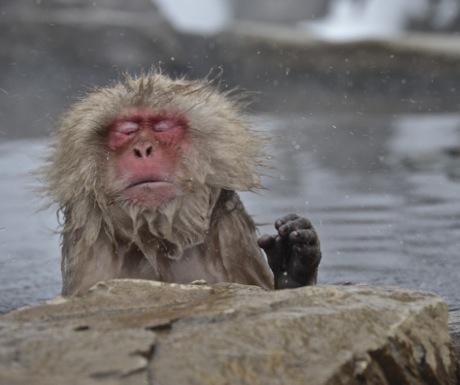 Snow monkey shaking head-Japan