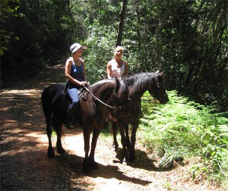 Black Horse Trails
