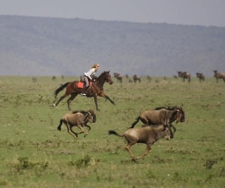 Riding safari horses