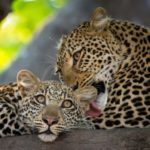 8 top tips for planning a Zambia safari