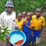 Rwanda Coffee Plantation