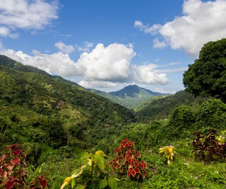 The Blue Mountains, Jamaica