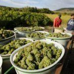 Autumn in Malaga Province, a harvest bounty of Spanish culinary festivals