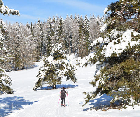 Classic Cross Country Skiing in the Southern Alps