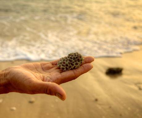 Trisara Beach Coral
