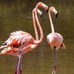 The top 5 wildlife phenomena in Mexico