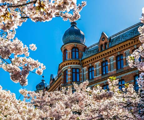 Gothenburgh-blossom2