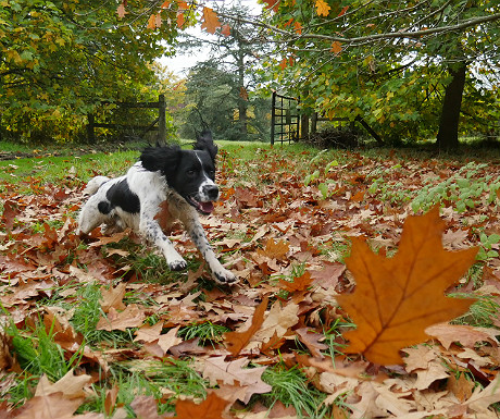 George chasing leaves