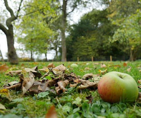 Stone Lodge garden in Autumn