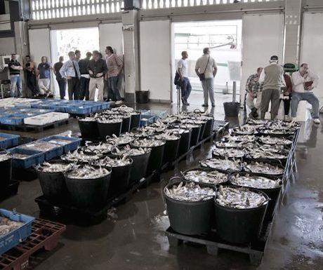Fish Market Caleta de Velez