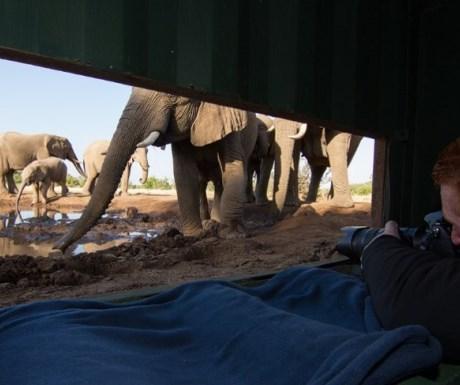 Mashatu water level hide - elephants