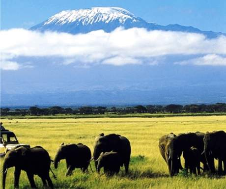 Wildlife drive from Tortilis Camp with Kilimanjaro