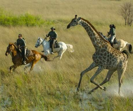 Okavango Delta Riding Safari African Horseback Safaris