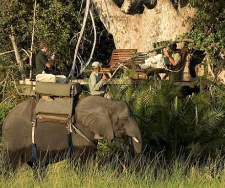 Botswana Abu Camp Elephant Back Safari