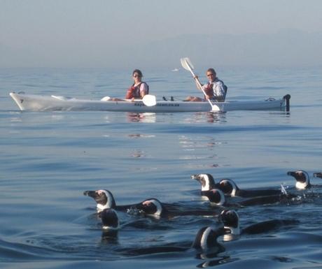 Cape Town kayaking