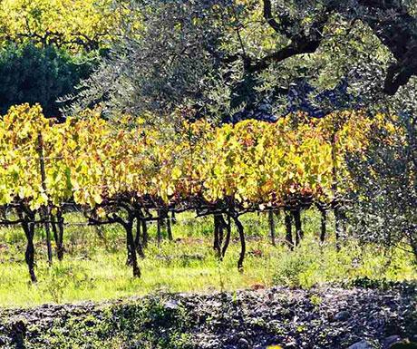 Wine Tourism Spain